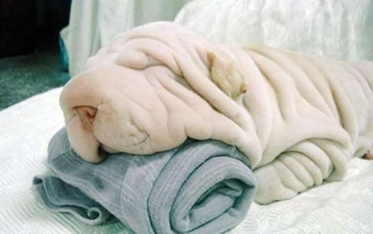 20Animals That Mastered the Art ofCamouflage